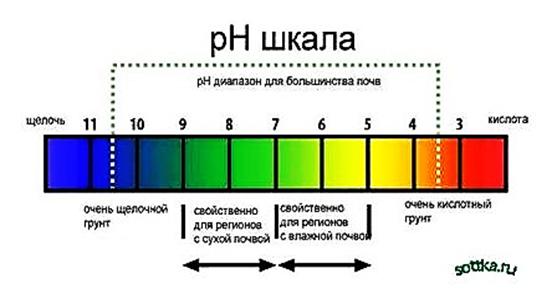 1317046490_kislotnost